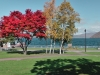 autumn foliage at Lake Toya