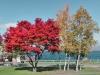 fall foliage at Lake Toya