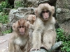 Snowmonkey kids without a sign