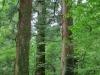Nikko's national park beginns right behind the mausoleum