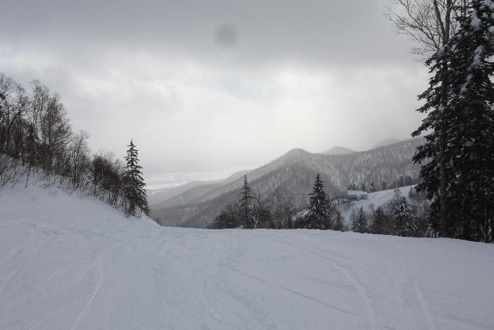 Furano forest